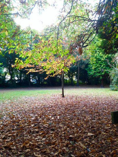 stanley-autumn